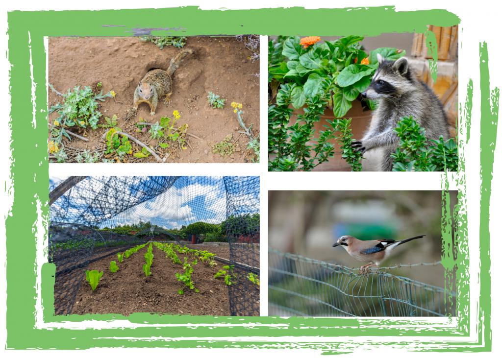 Animals in Garden Graphic